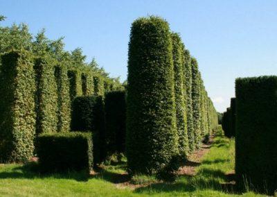 Formgehölze der Baumschule Schmitz in Kaarst
